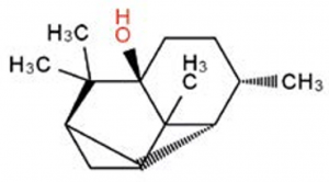 quimiotipo pachuli